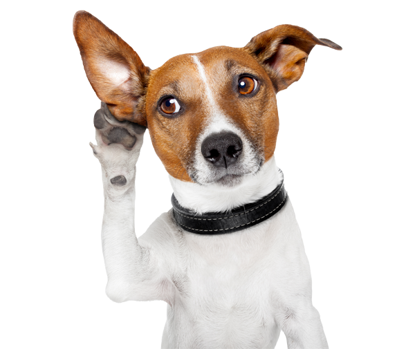 Dog with his paw up to his ear