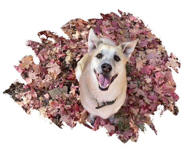 Dog on the fall leaves