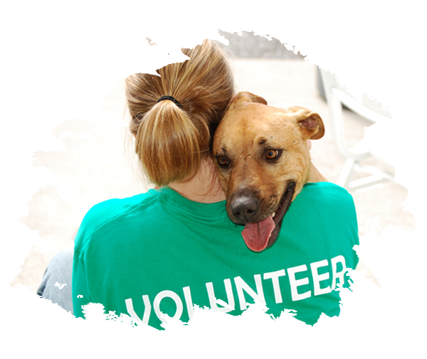 Volunteer with a dog
